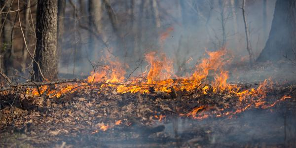 An SPFD prescribed burn in action. (Photo courtesy of Jonathan Myers)